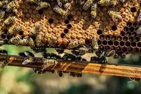 Senador Juan Castro buscan regular actividad apícola y el cuidado de las abejas